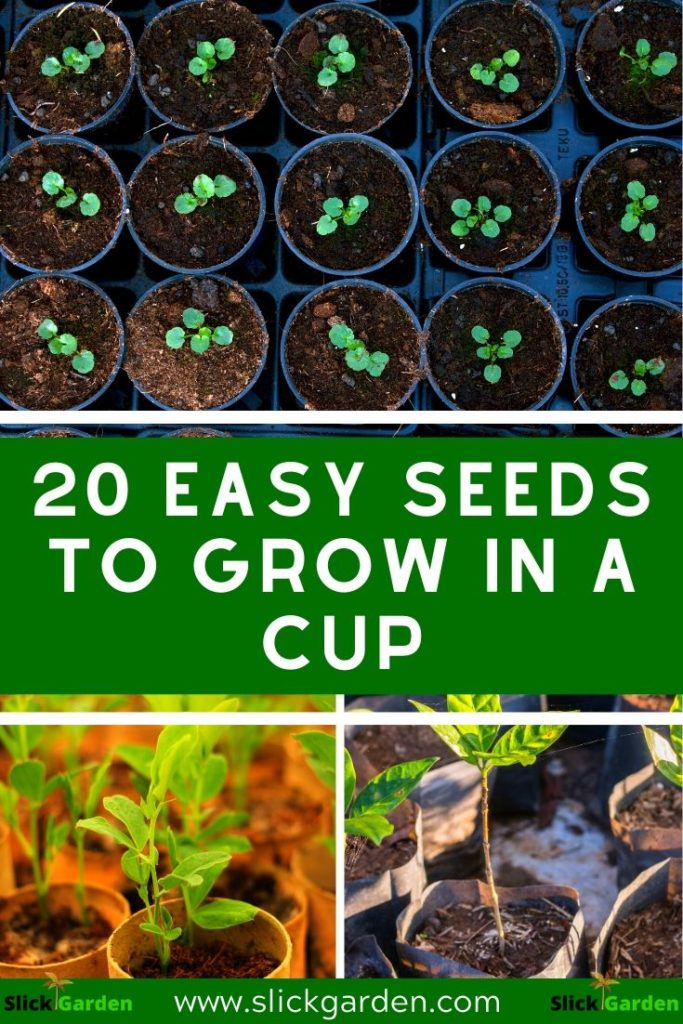 20 Easy Seeds To Grow In A Cup: pinterest
