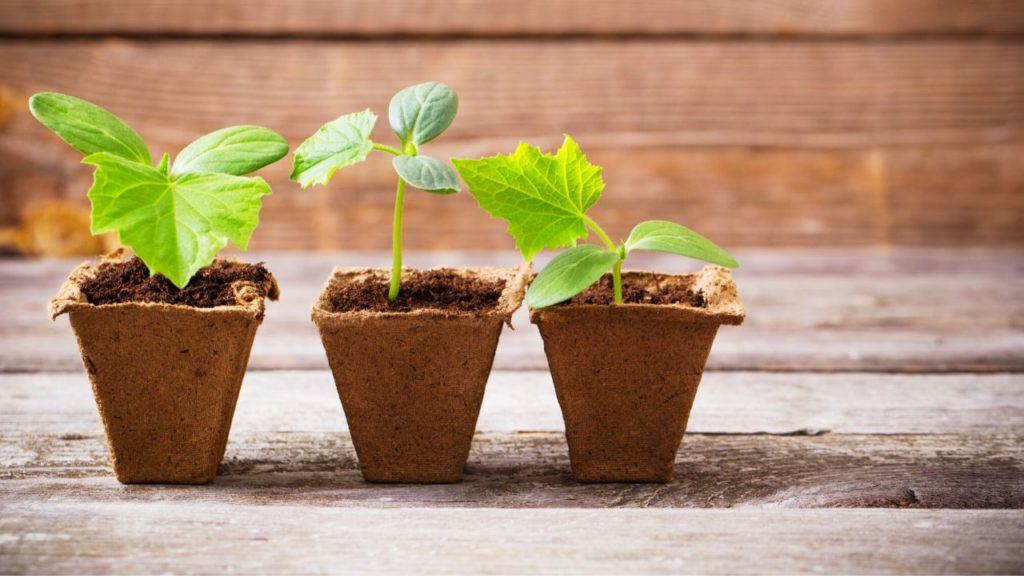 20 Easy Seeds To Grow In A Cup: