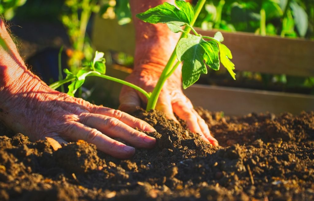 How To Take Care Of Your Raised Bed Vegetable Garden?