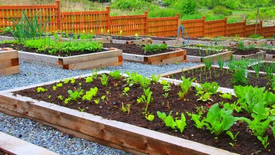 Why Raised Bed Vegetable Garden?