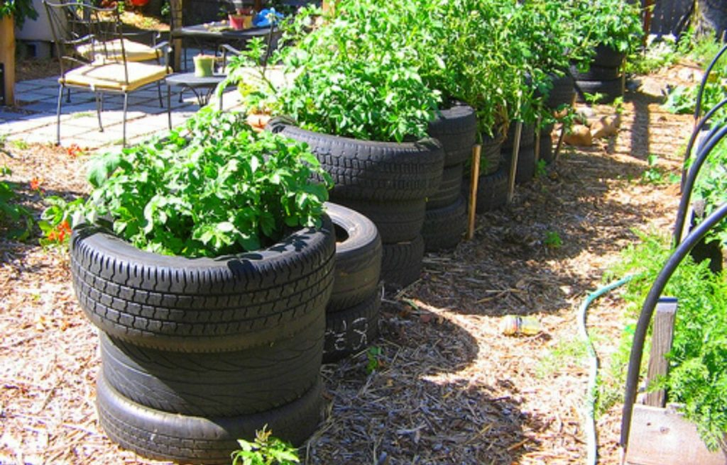 Old Tires Herb garden