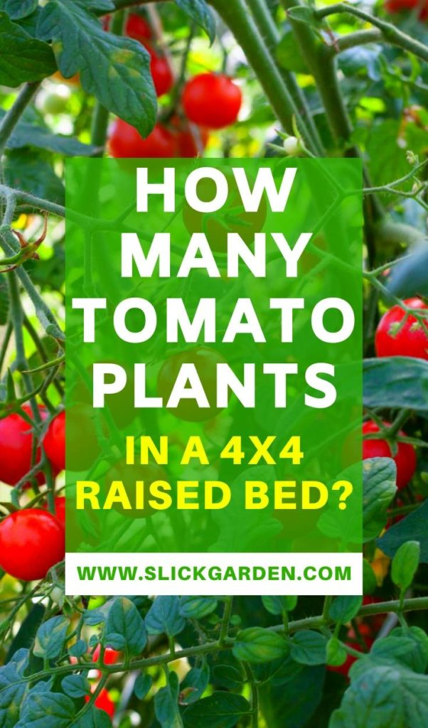 How Many Tomato Plants In A 4x4 Raised Bed?