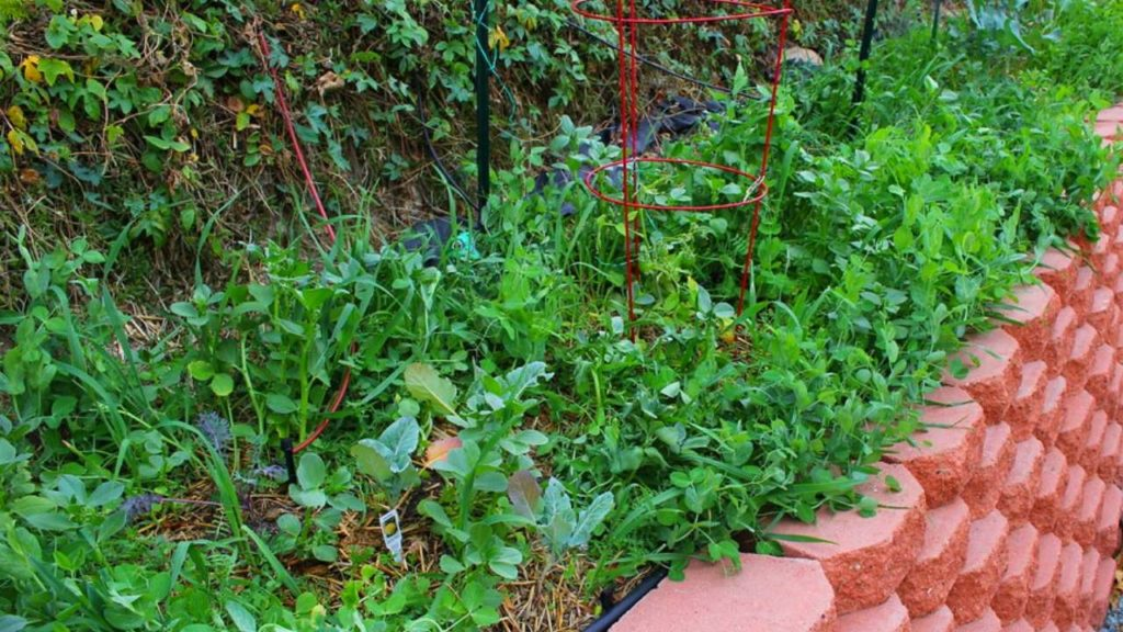 What To Grow In A Raised Bed Vegetable Garden?