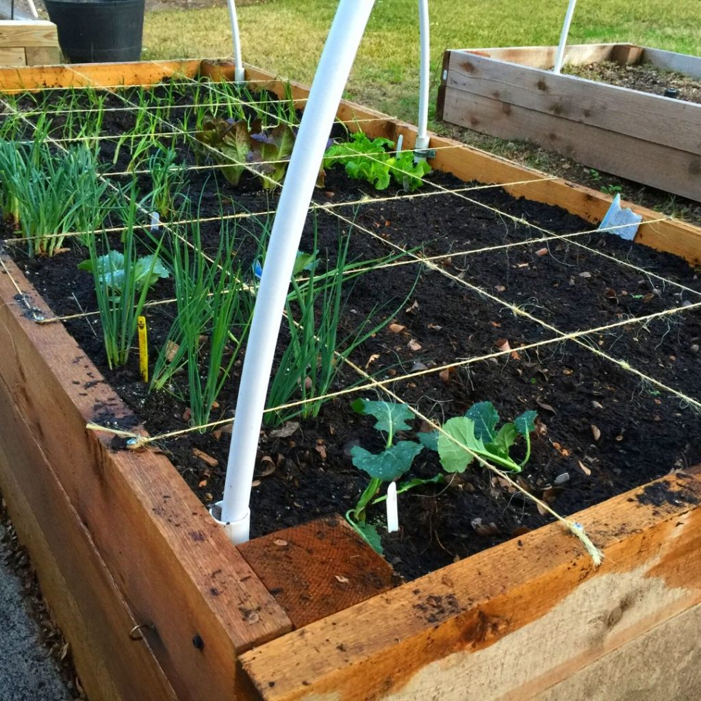 Square Foot Garden Bed.