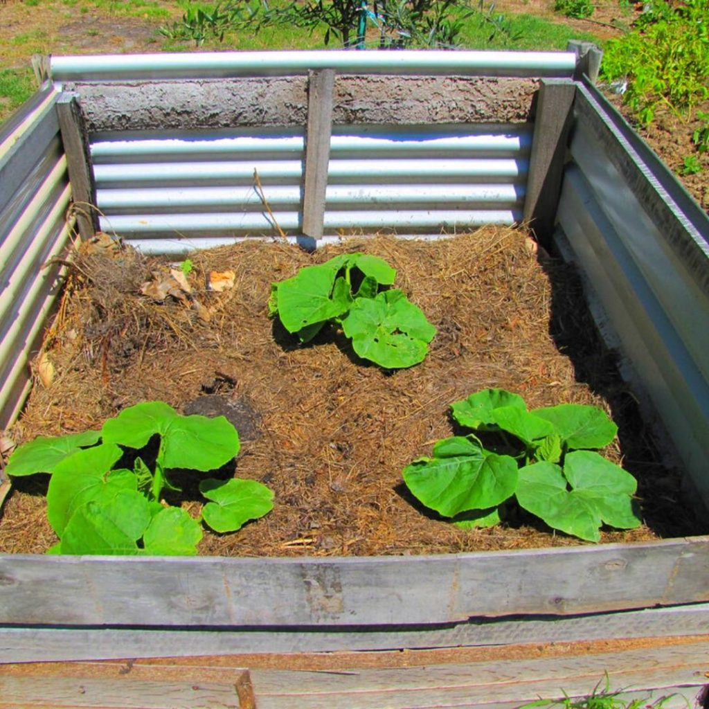 What Is The Best Time To Grow Pumpkins In A Raised Bed?
