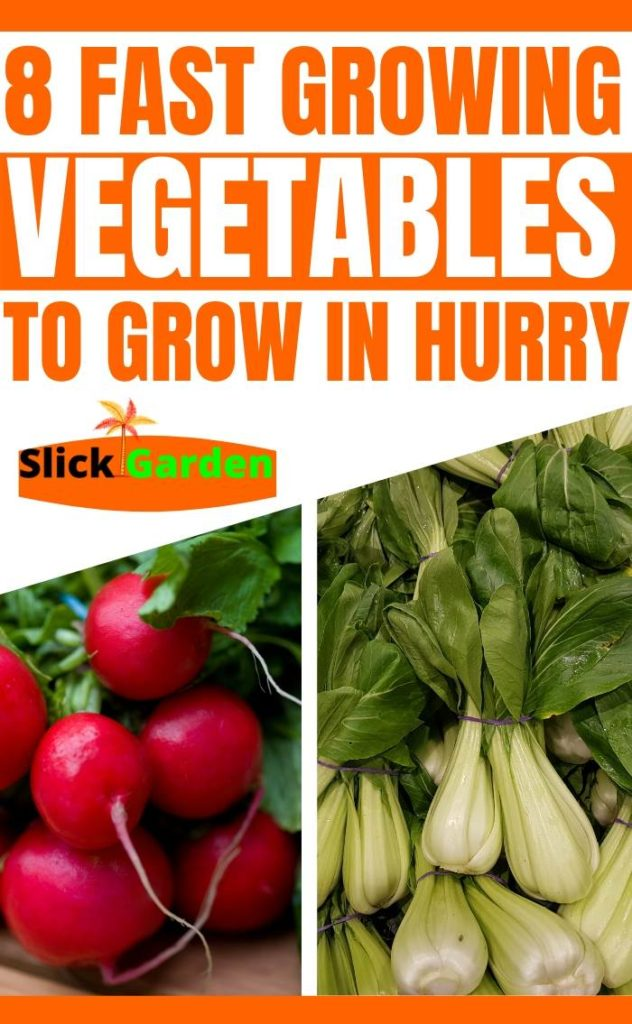 8 Fast Growing Vegetables That You Can Grow In A Hurry