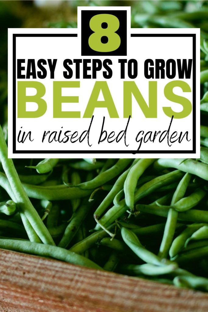 easy steps to grow beans pin