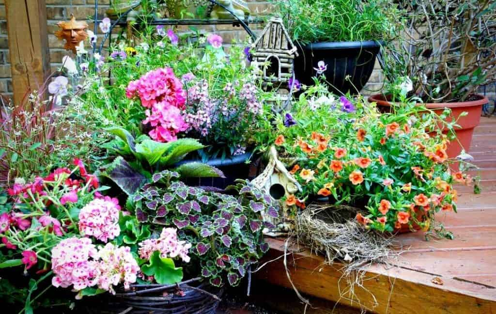 AN UNUSUAL UPCYCLED CONTAINER GARDEN
