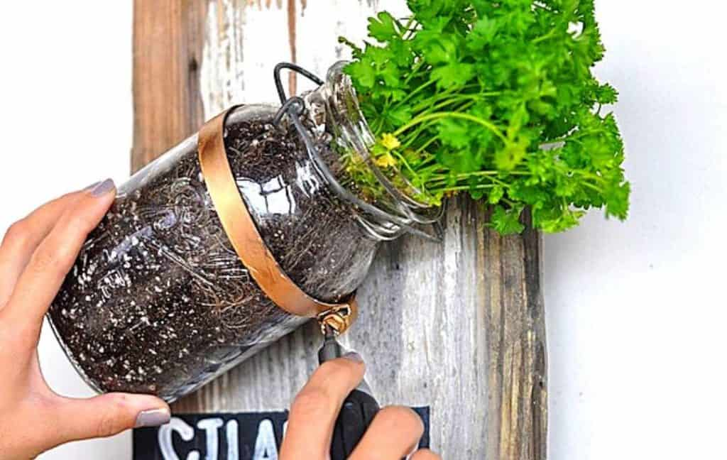 ANOTHER MASON JARS HERB GARDEN IDEA