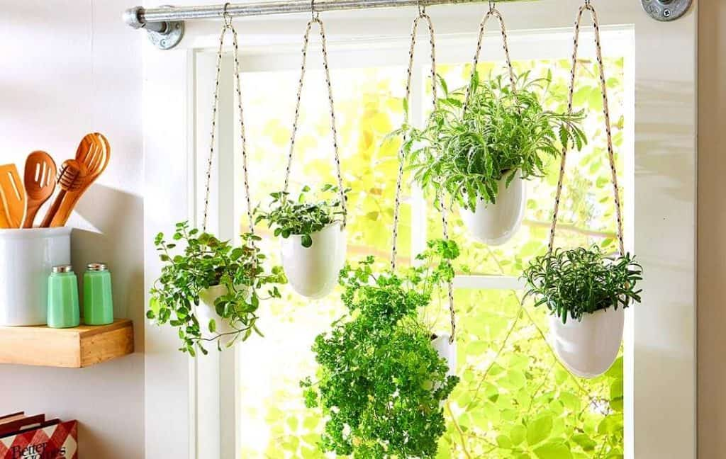 HANGING HERB GARDEN ON CURTAIN ROD