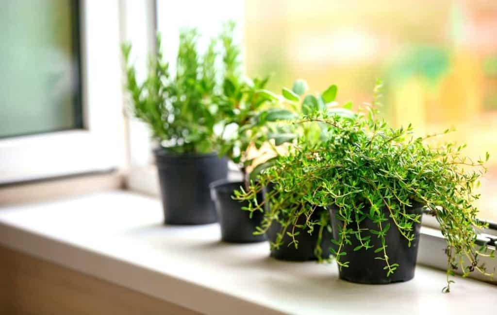 THE HERB GARDEN AT WINDOWSILL